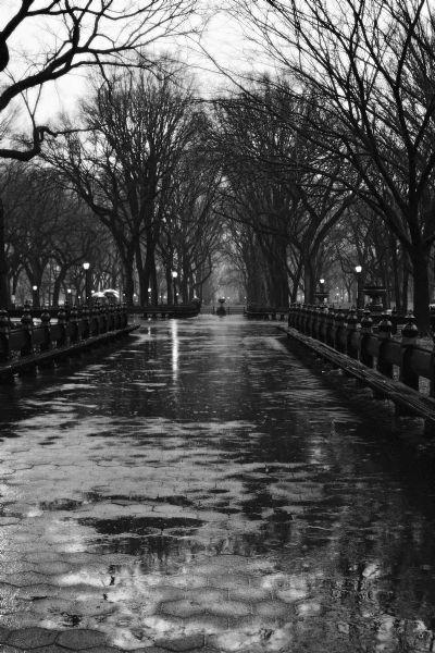Central Park Rain