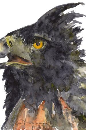 Black & Chestnut Eagle