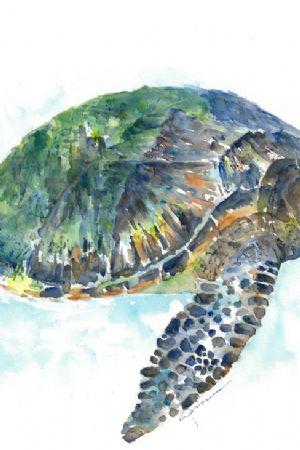 Sea Turtle No. 20