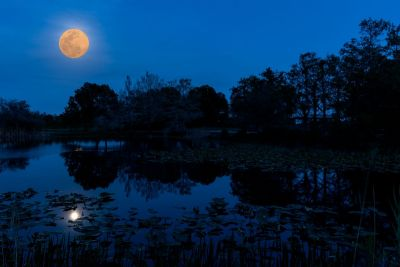 Moon Over the Marsh
