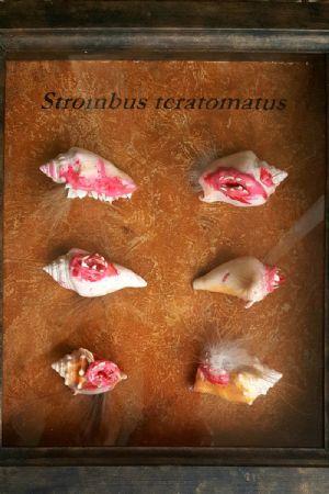Strombus teratomatis